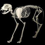 cat skeleton #6