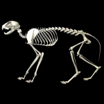 cat skeleton #7
