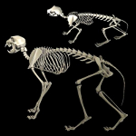 cat skeleton #8