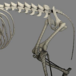 cat skeleton #13