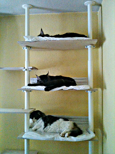 Office Cat Tree